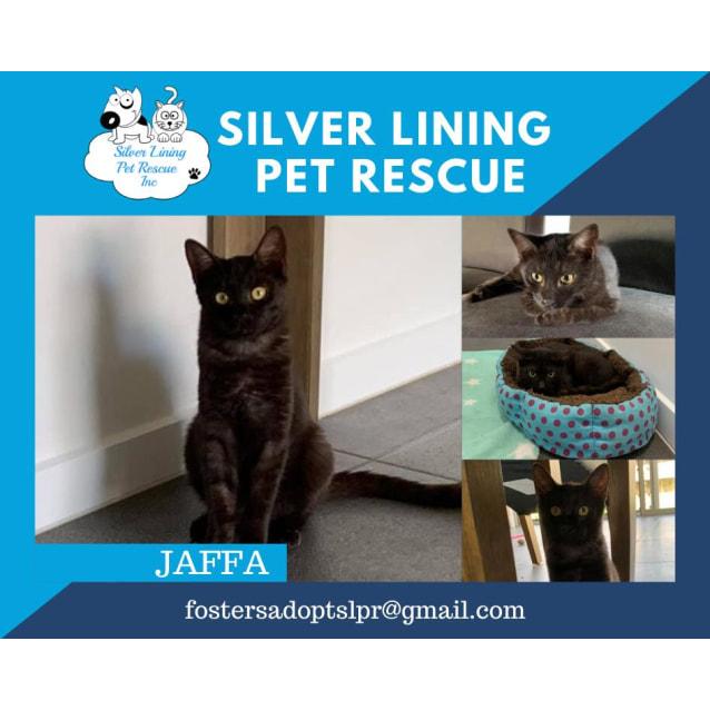 Photo of Jaffa