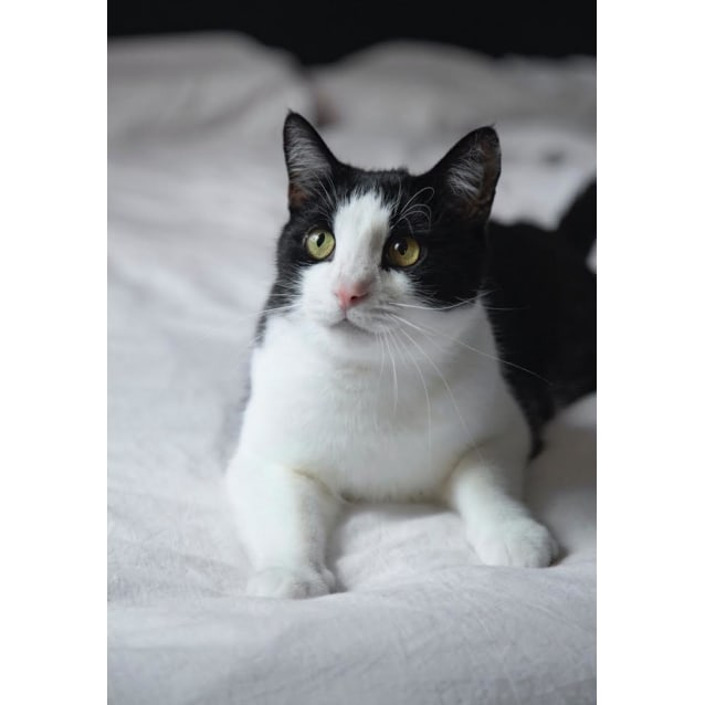 Photo of Tuffy ~ 8 Year Old Male Cat (On Trial 11/4/20)
