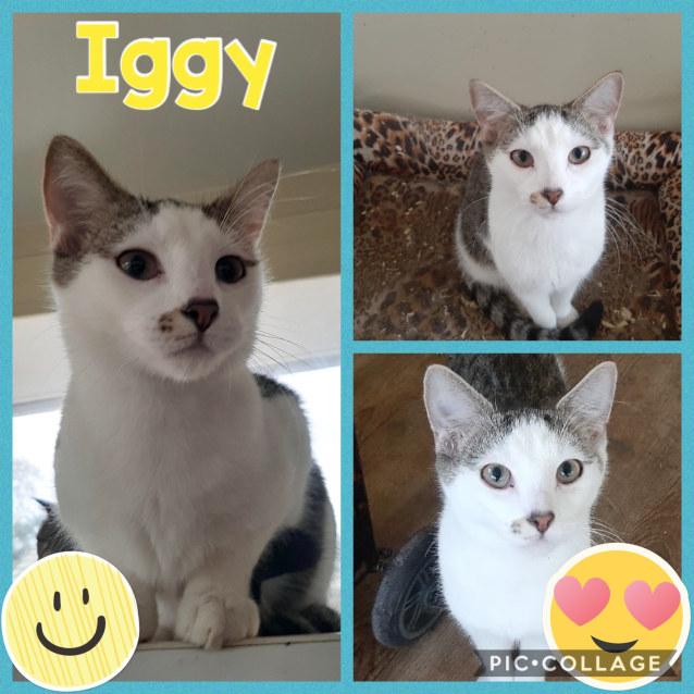 Photo of Iggy