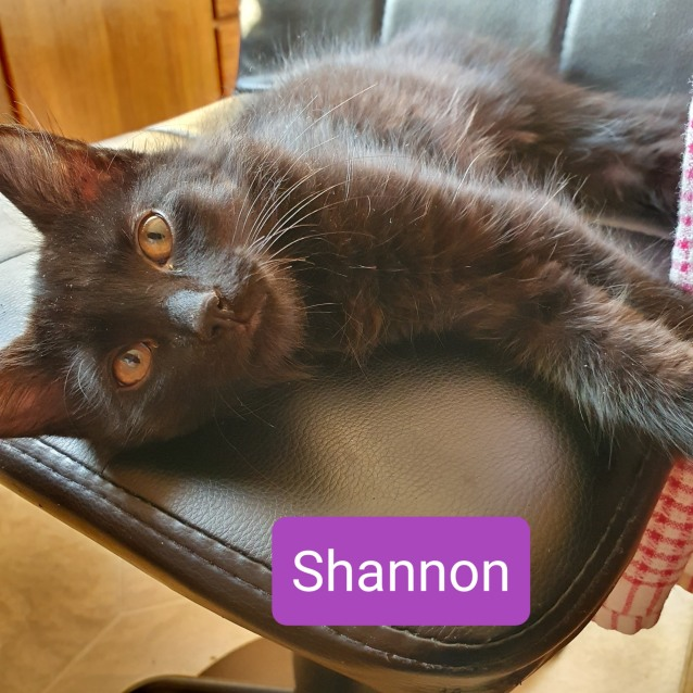 Photo of Shannon