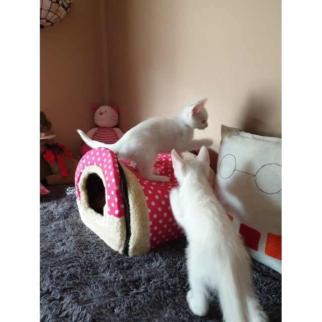 Photo of Sailor & Smudge