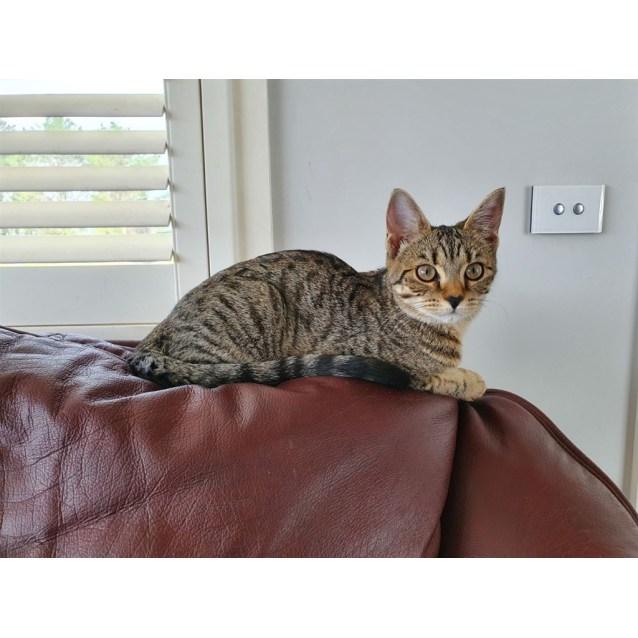 Photo of Tiggy