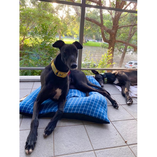 Photo of Elwood (In Foster)