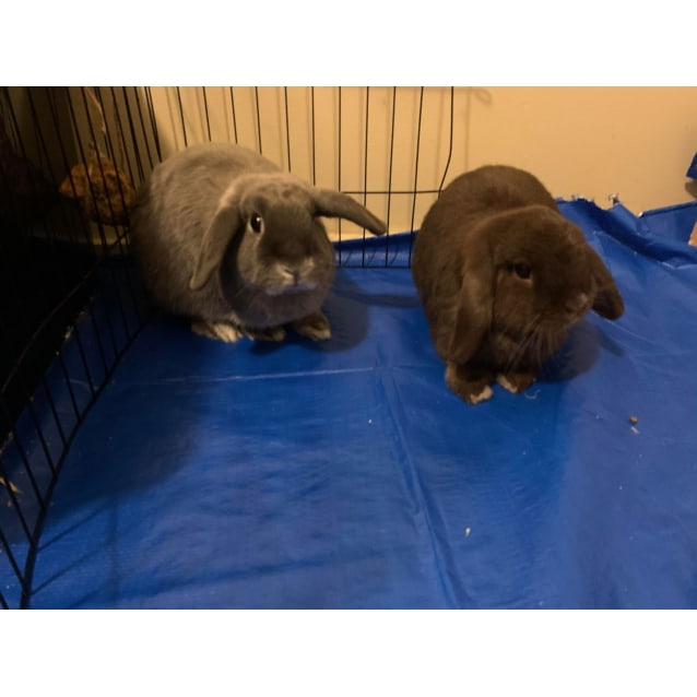 Photo of Thumper And Pudge