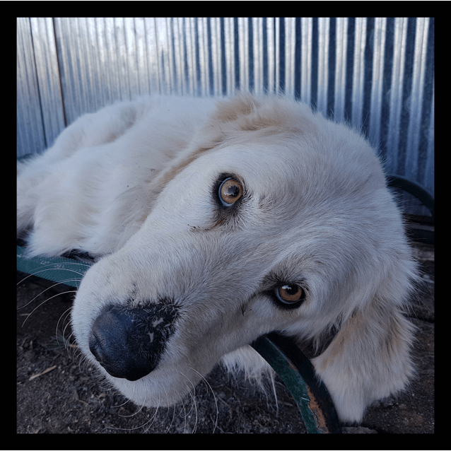 Photo of Lilly (Companion Dog)