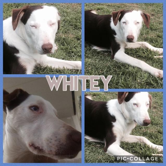 Photo of Whitey