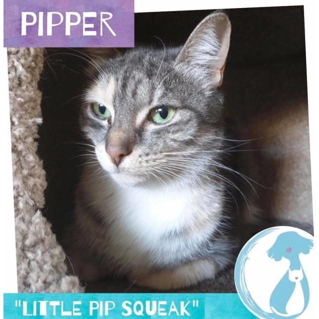 Photo of Pipper
