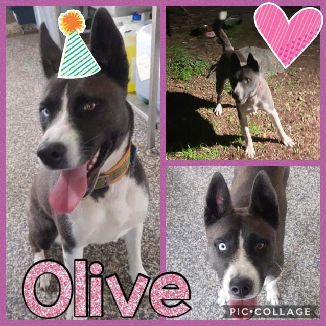 Photo of Olive