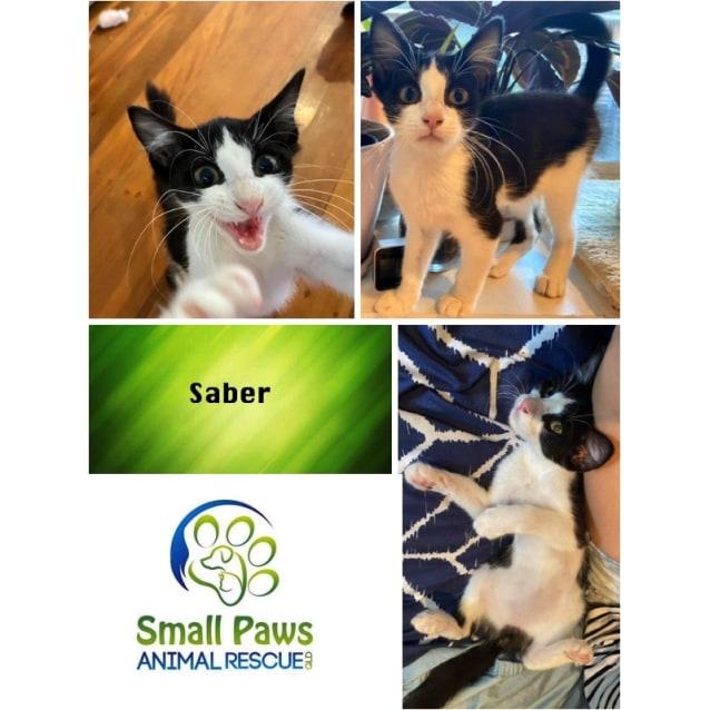 Photo of Saber