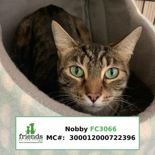 Photo of Nobby