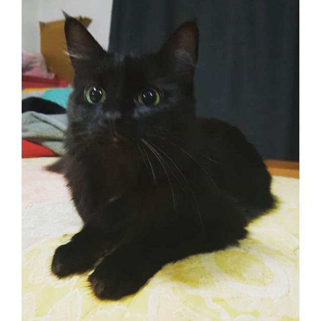 Photo of Hera