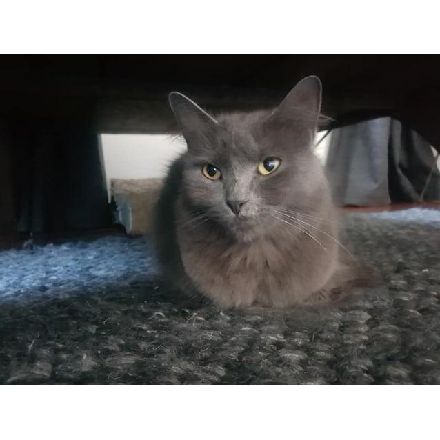 Photo of Luna   Lou