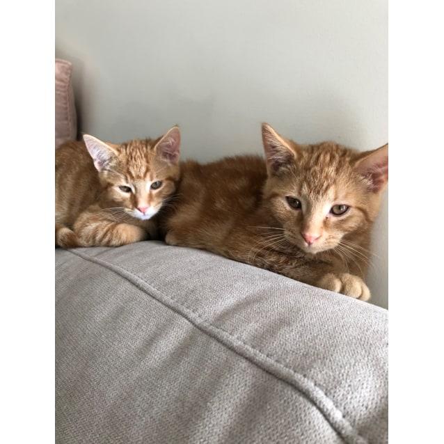 Photo of Charles & Jake