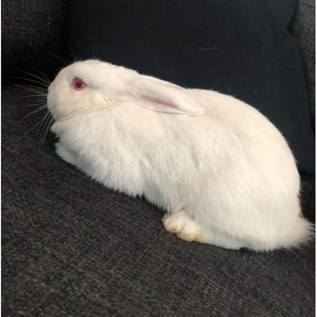 Photo of Bertie