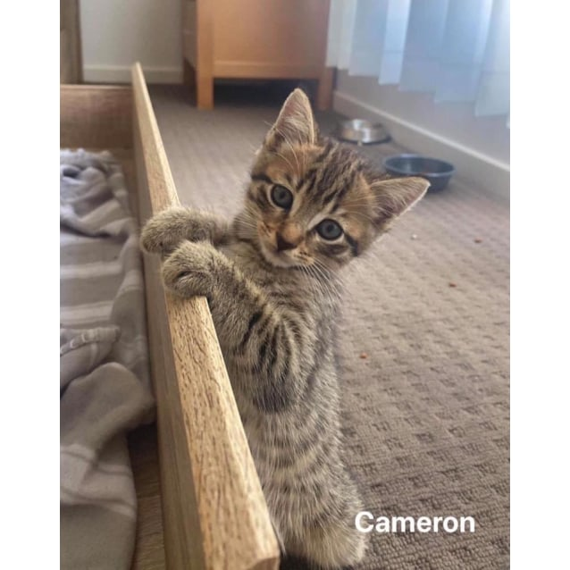 Photo of Cameron