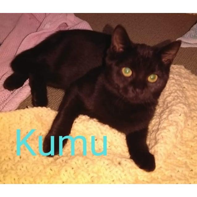 Photo of Kumu