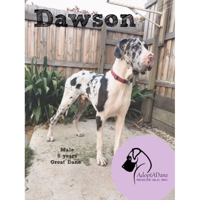 Photo of Dawson