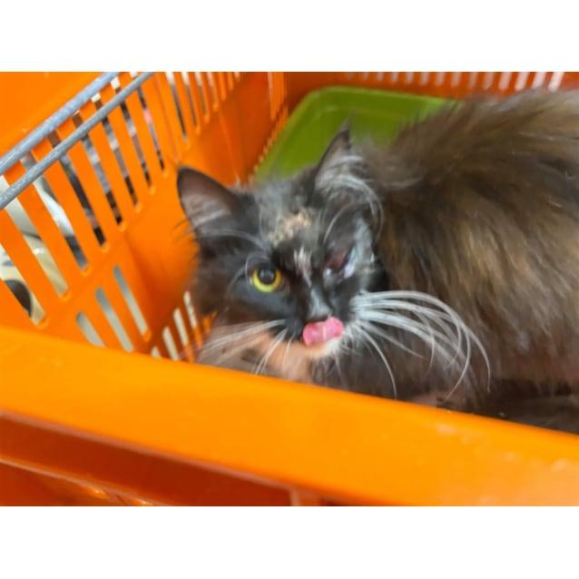 Photo of Miss Igor