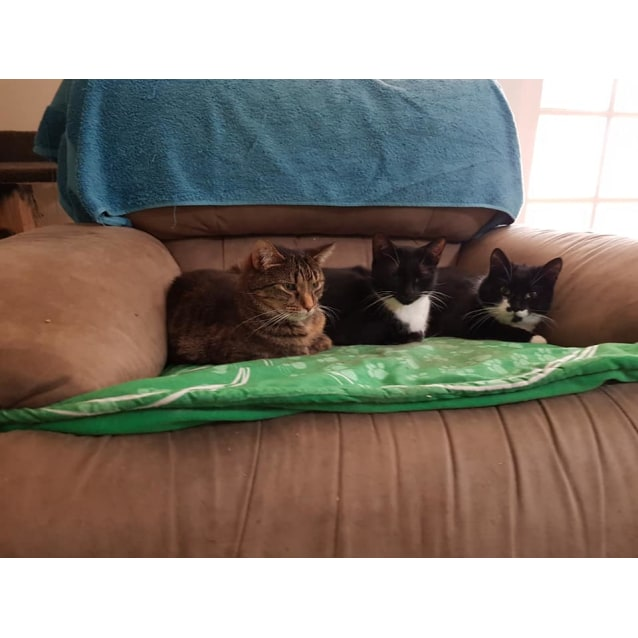 Photo of Maggie **2nd Chance Cat Rescue**