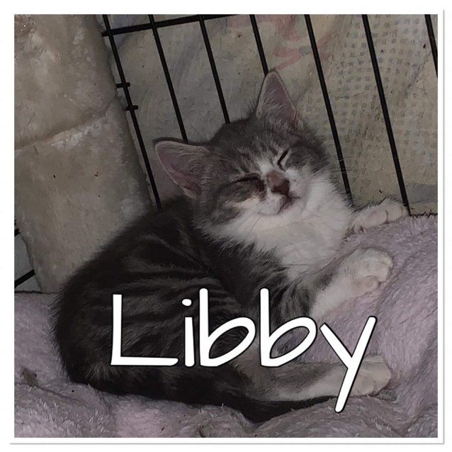Photo of Libby