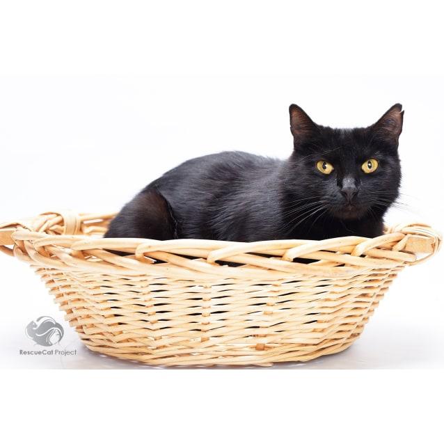 Photo of Black Beauty Jedda