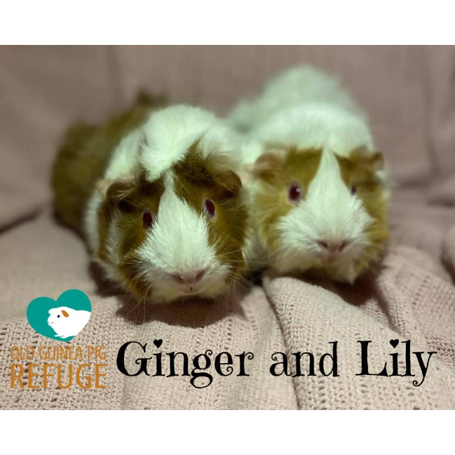 Photo of Ginger And Lily (Not Suitable For Kids Under 12)