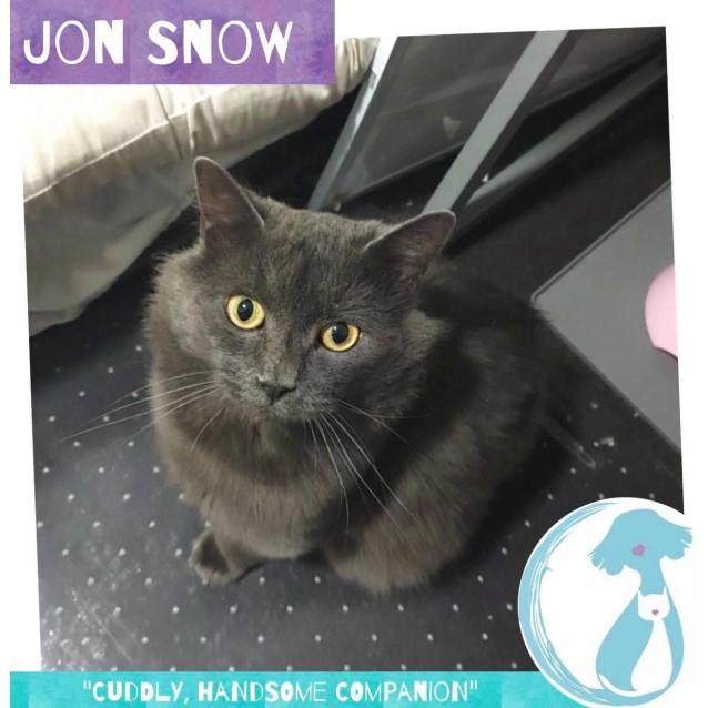 Photo of Jon Snow