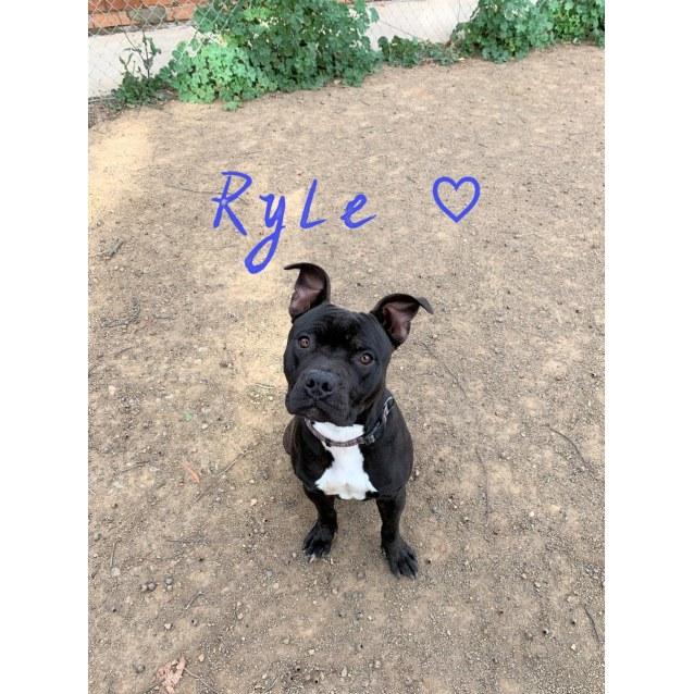 Photo of Ryle