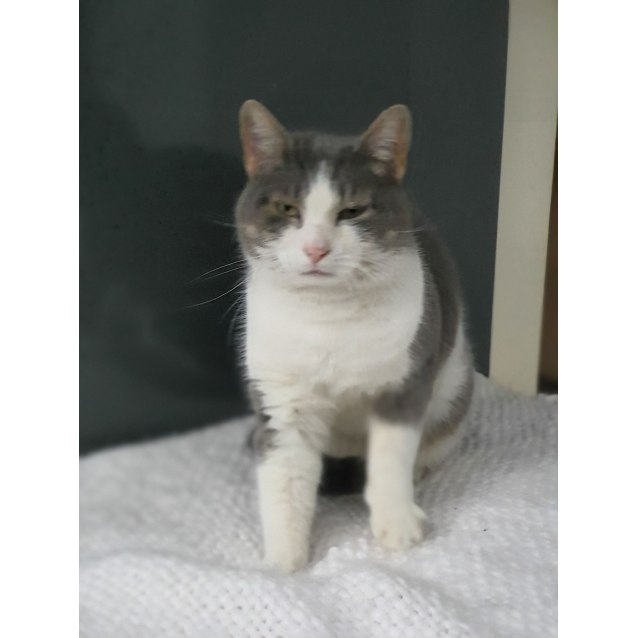Photo of Ruby (Located In Oakleigh South)