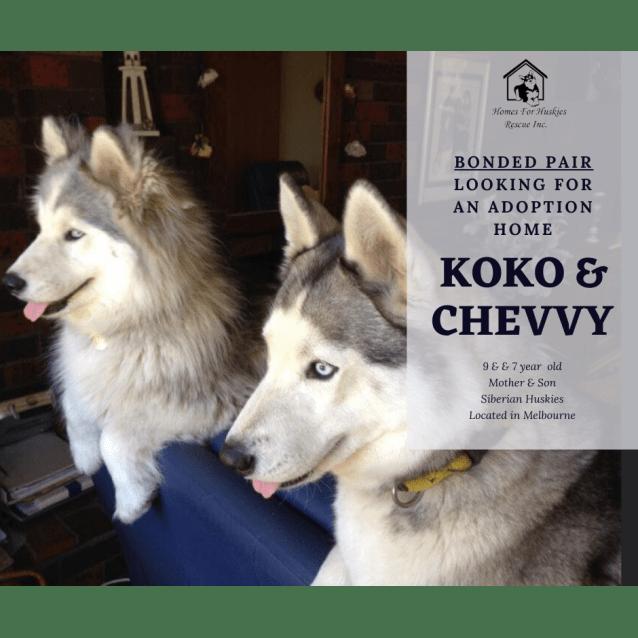 Photo of Koko & Chevvy