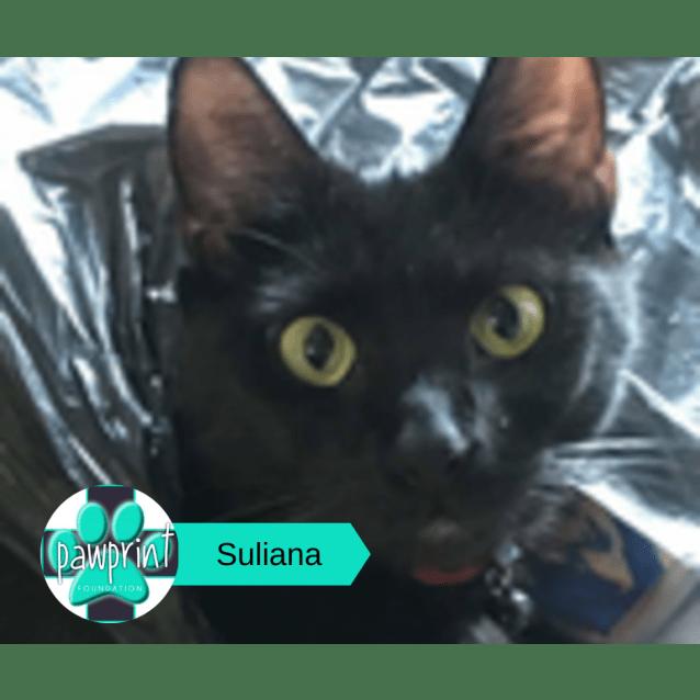 Photo of Suliana