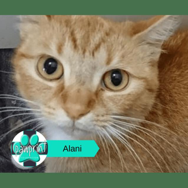 Photo of Alani