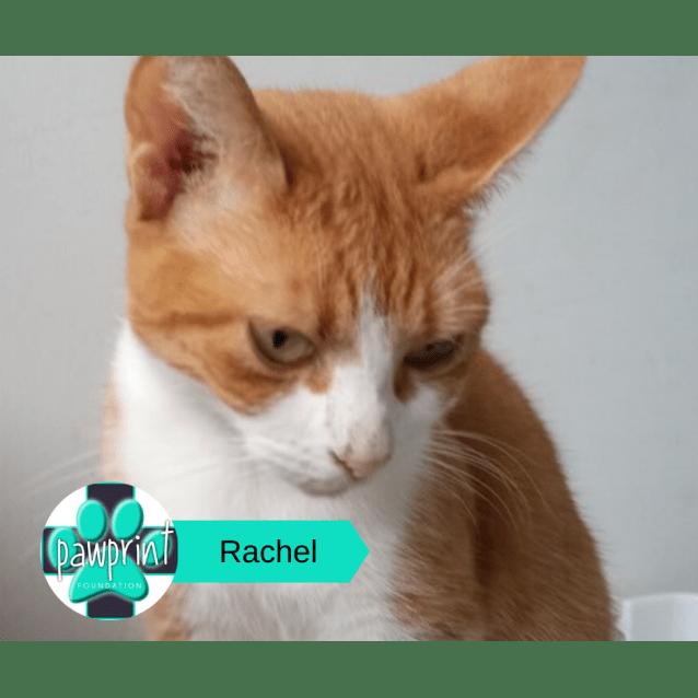 Photo of Rachel