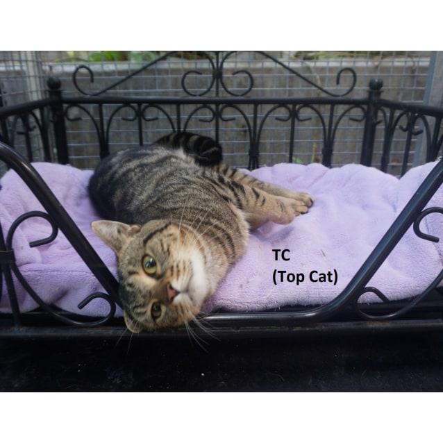 Photo of Tc (Top Cat)