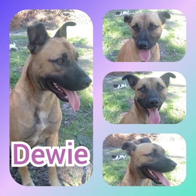 Photo of Dewie Db517