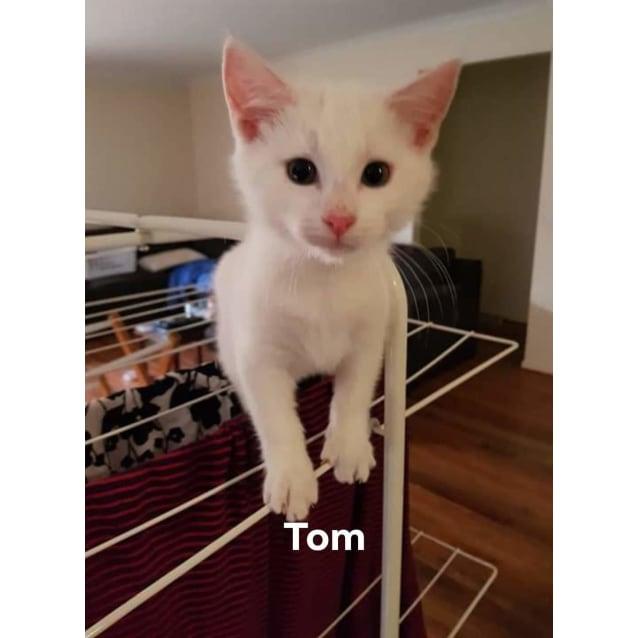 Photo of Tom ❤