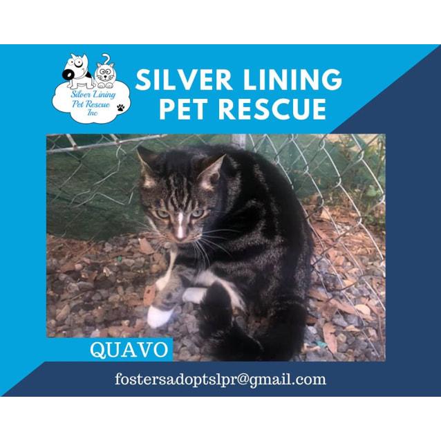 Photo of Quavo