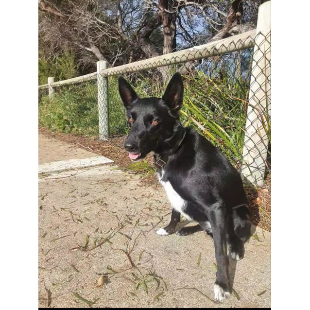 Photo of Molly Dl2464