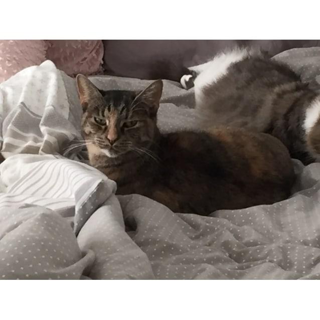 Photo of Nessa & Sophie