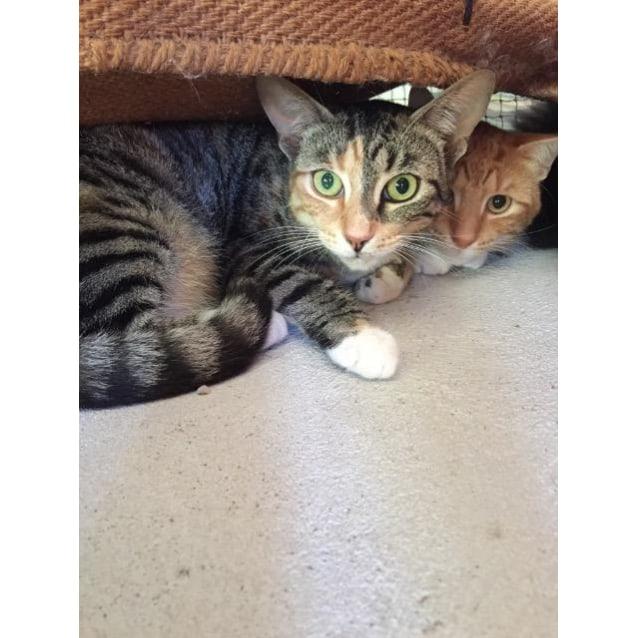 Photo of Sophie & Nessa