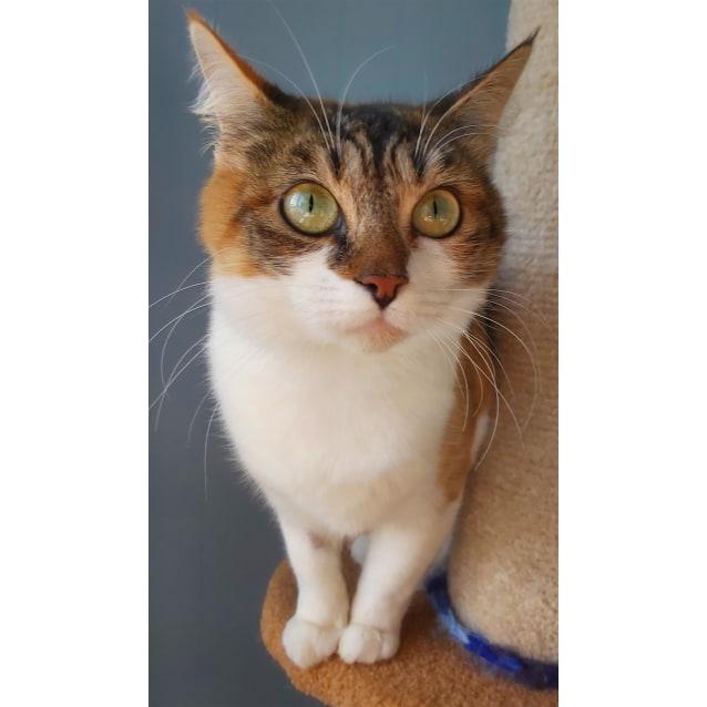 Photo of Kittey