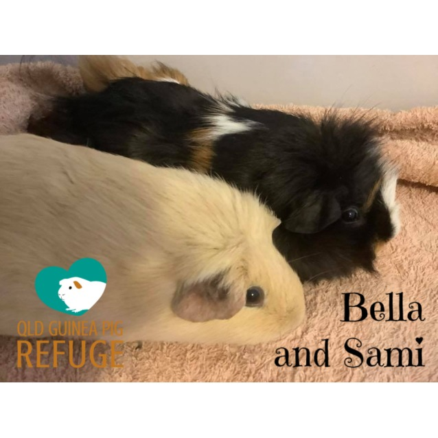 Photo of Bella And Sami (Unsuitable For Children Under 12)