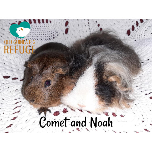 Photo of Comet And Noah (Desexed Male)