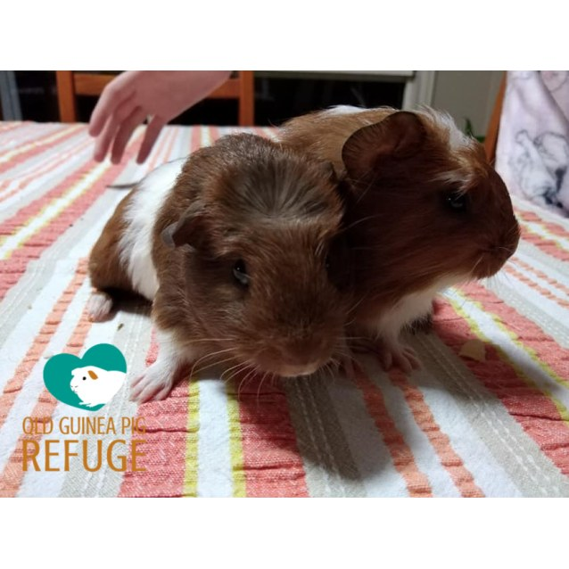 Photo of Gingernut And Peanut (Unsuitable For Children)