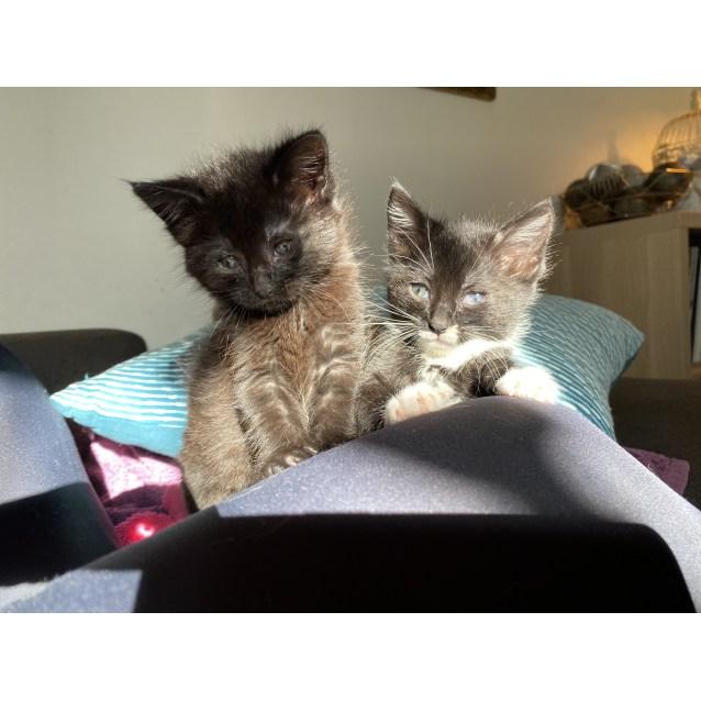 Photo of Daisy & Poppy