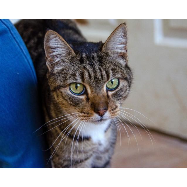 Photo of Barnaby