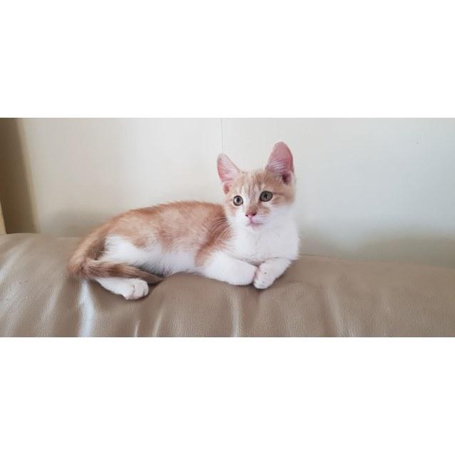 Photo of Timone