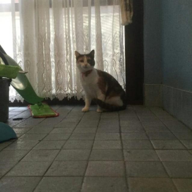 Photo of Jacqui