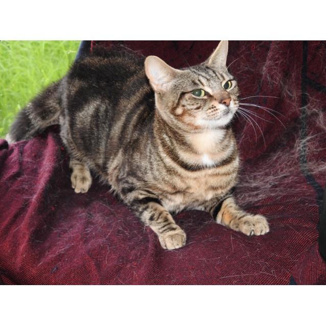 Photo of Mavis