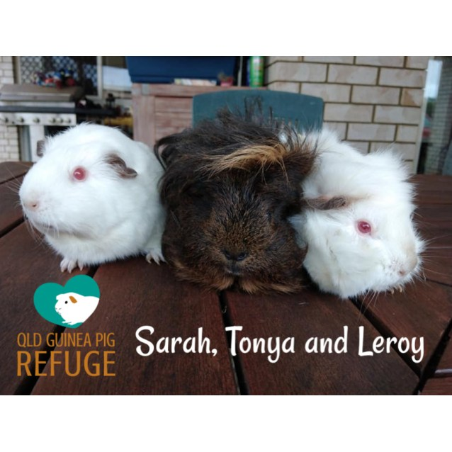 Photo of Sarah, Tonya And Leroy (Desexed Male) Adults Only.